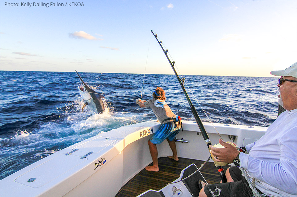 Giant Black Marlin Cairns – KEKOA Sports Fishing Charters